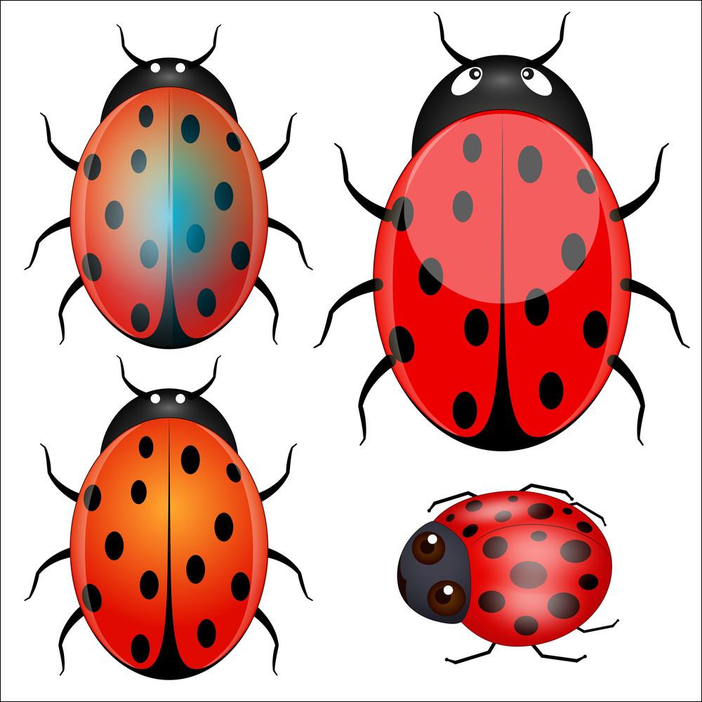 Ladybug Vector Designs