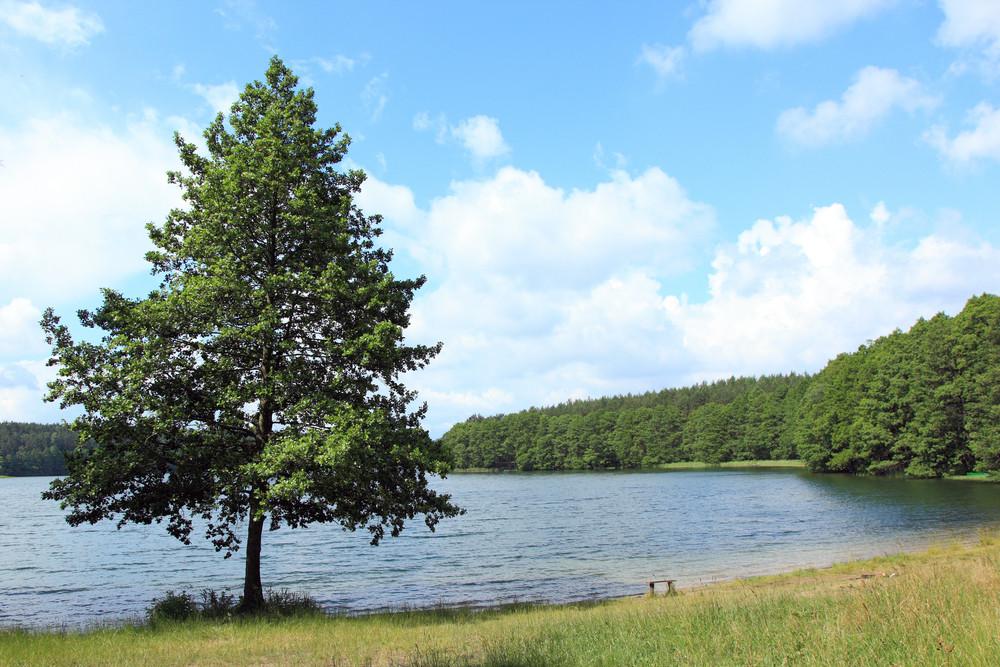 Lake Coast