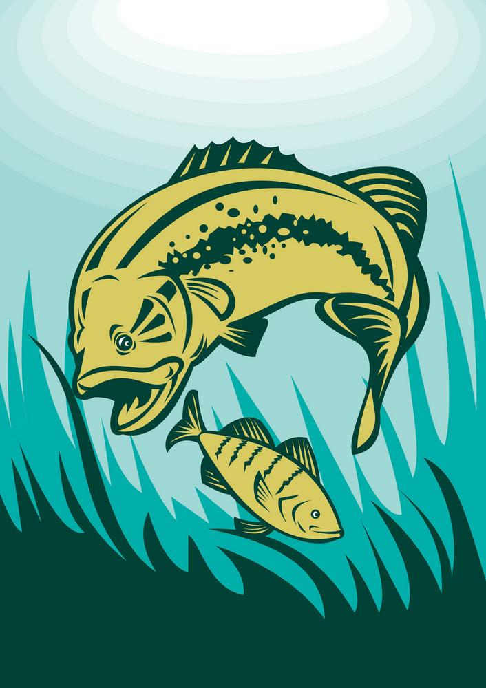 Largemouth Bass Preying On Perch Fish