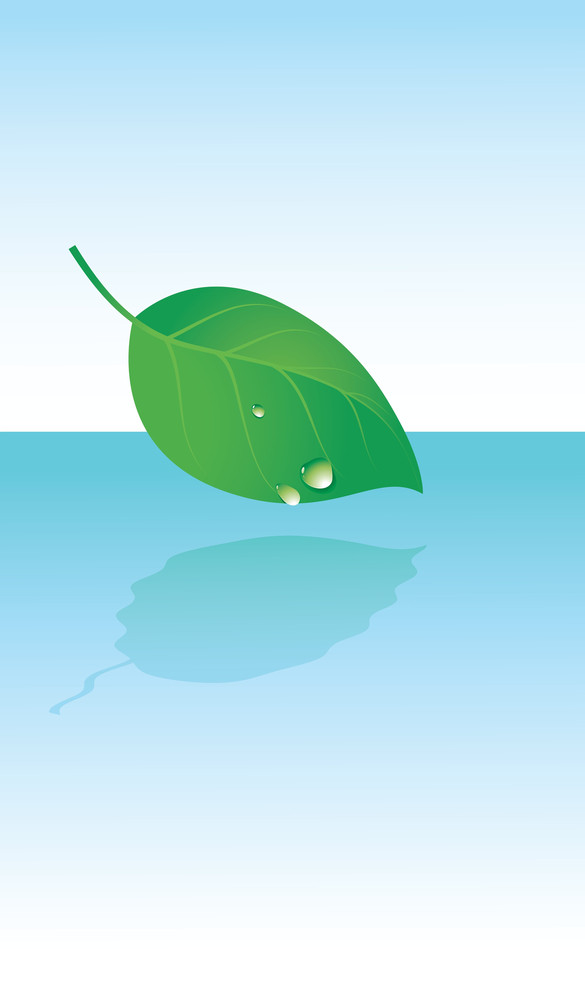 Leaf And Dew Drops. Vector Illustration