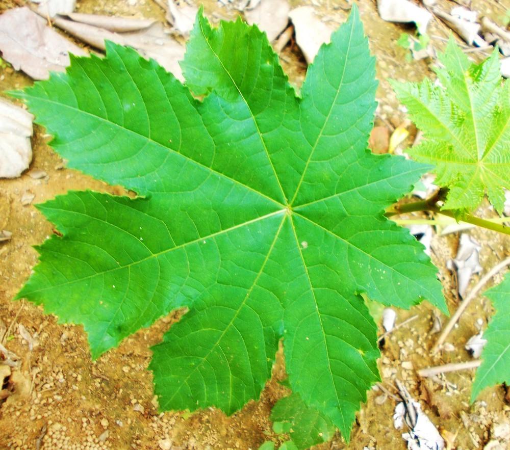 Leaf Texture 18