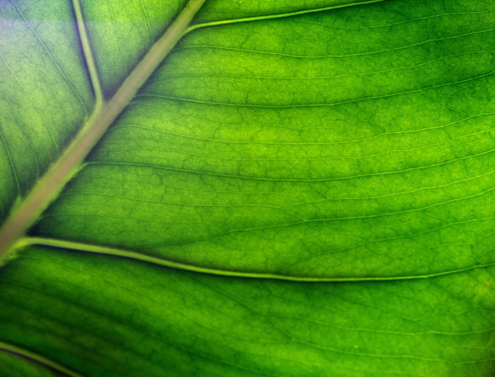 Leaf Texture 46