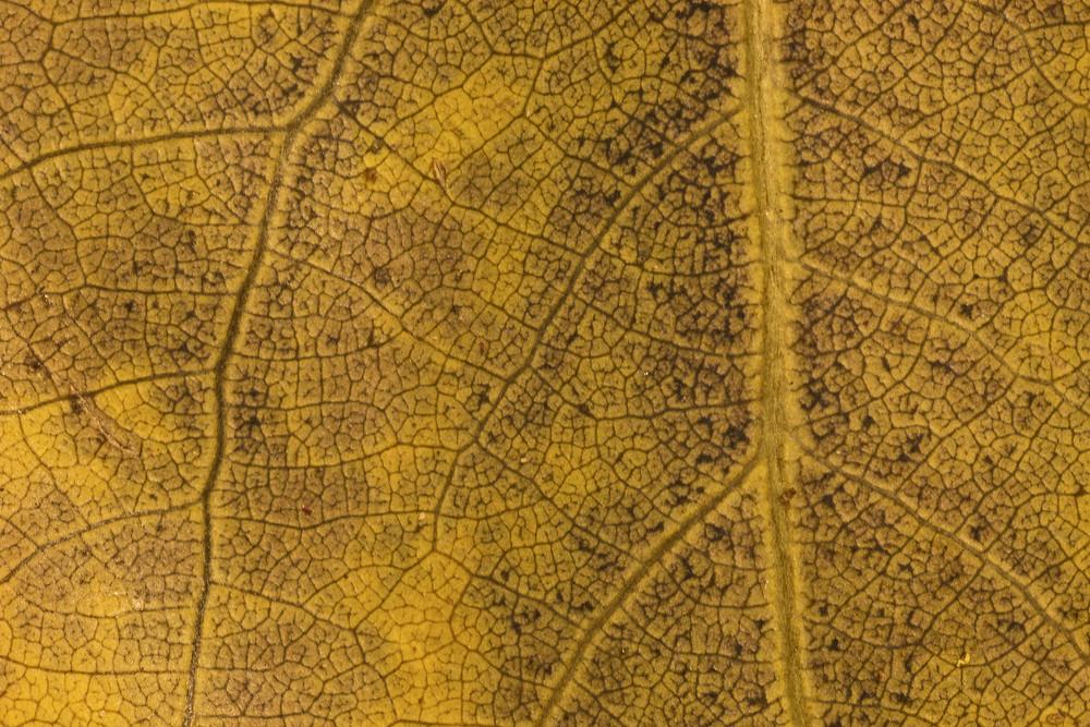 Leaf Texture 57