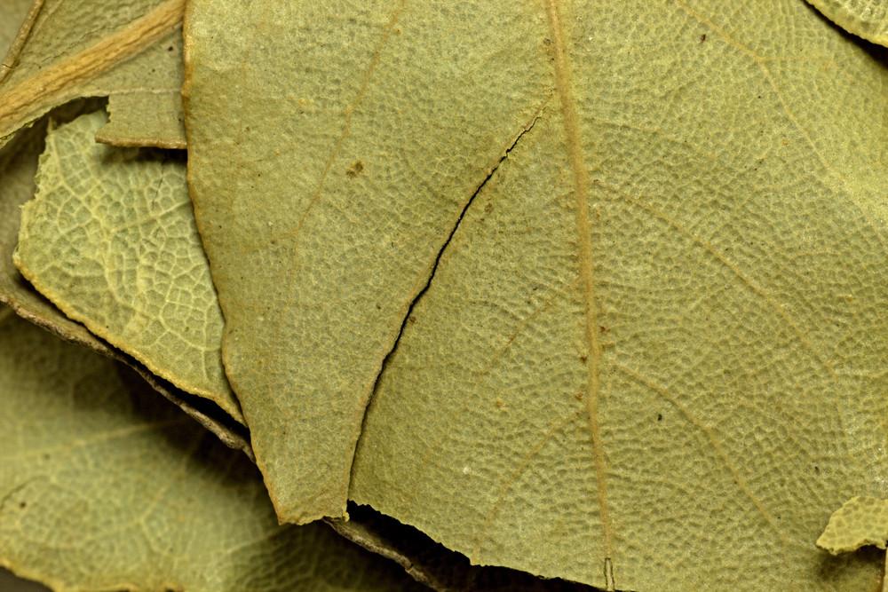 Leaf Texture 71