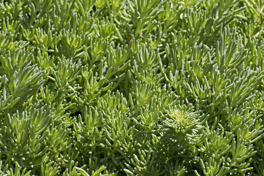 Leaf Texture 79