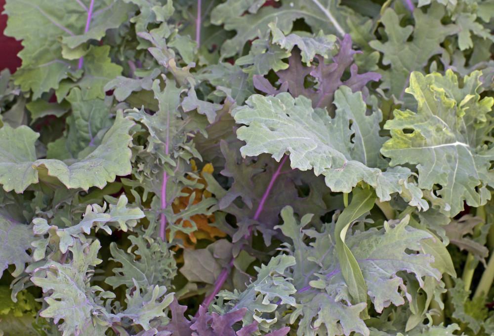 Leaf Texture 81