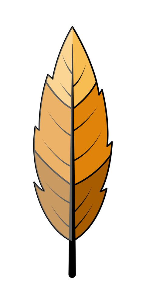 Leaf Vector Design
