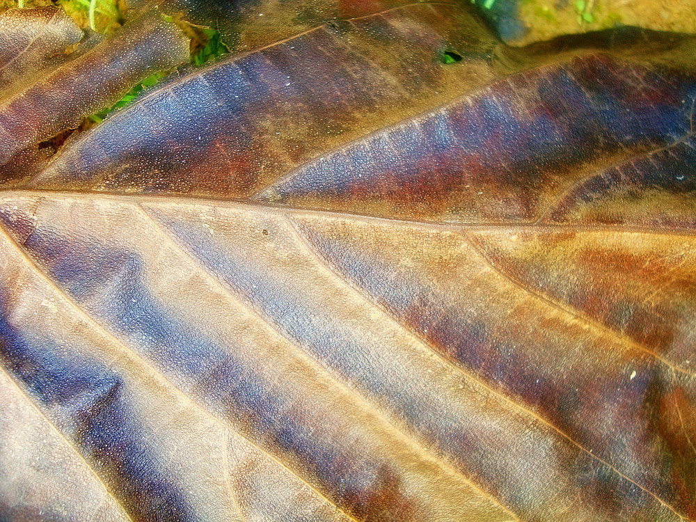 Leaf_texture_background
