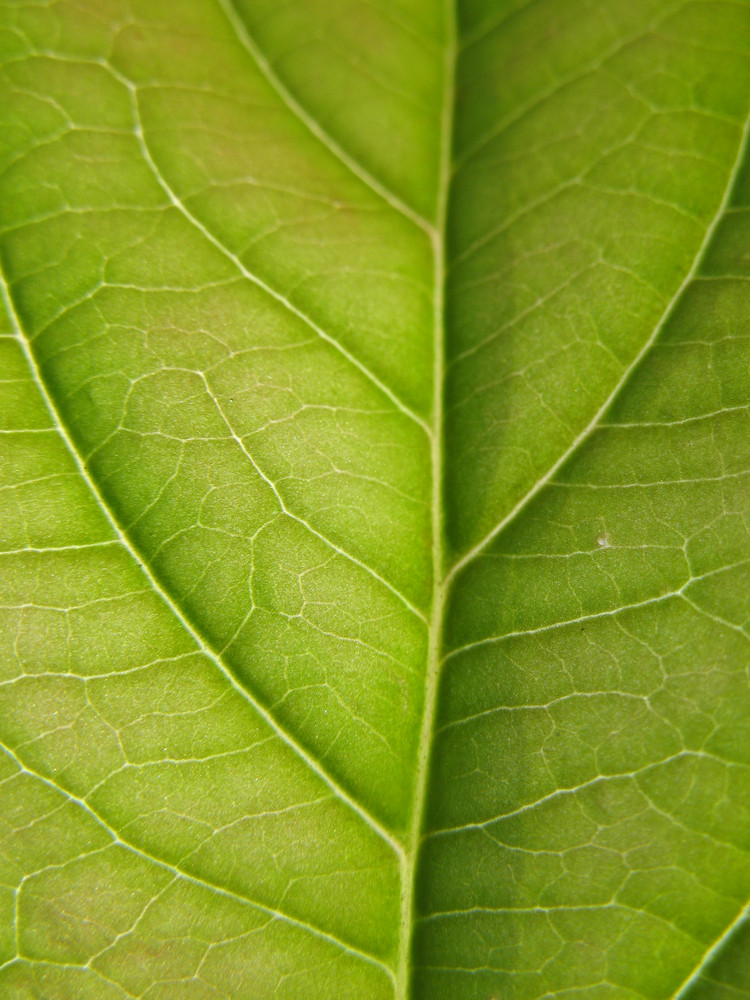 Leaves 13 Texture