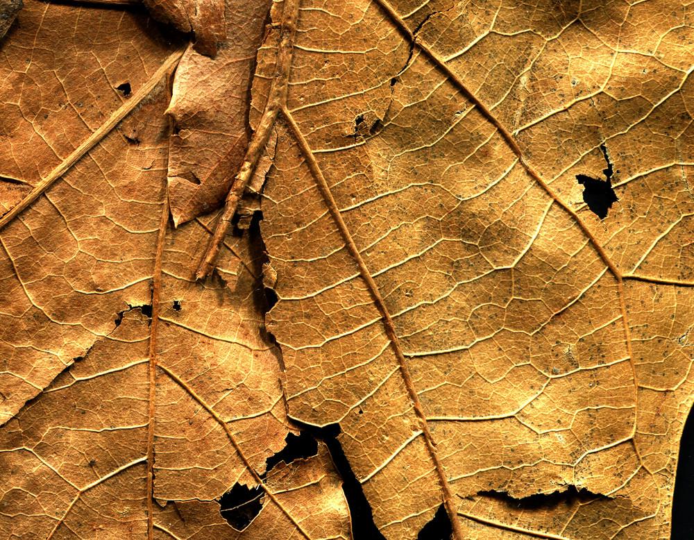 Leaves 18 Texture