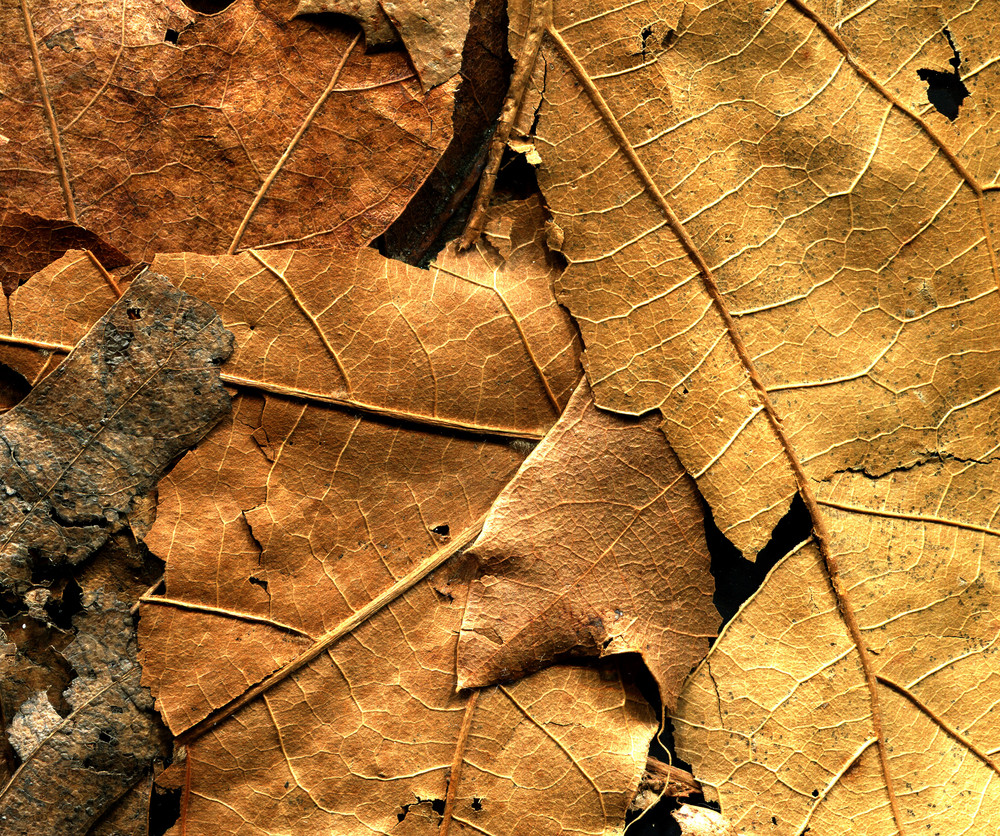 Leaves 19 Texture