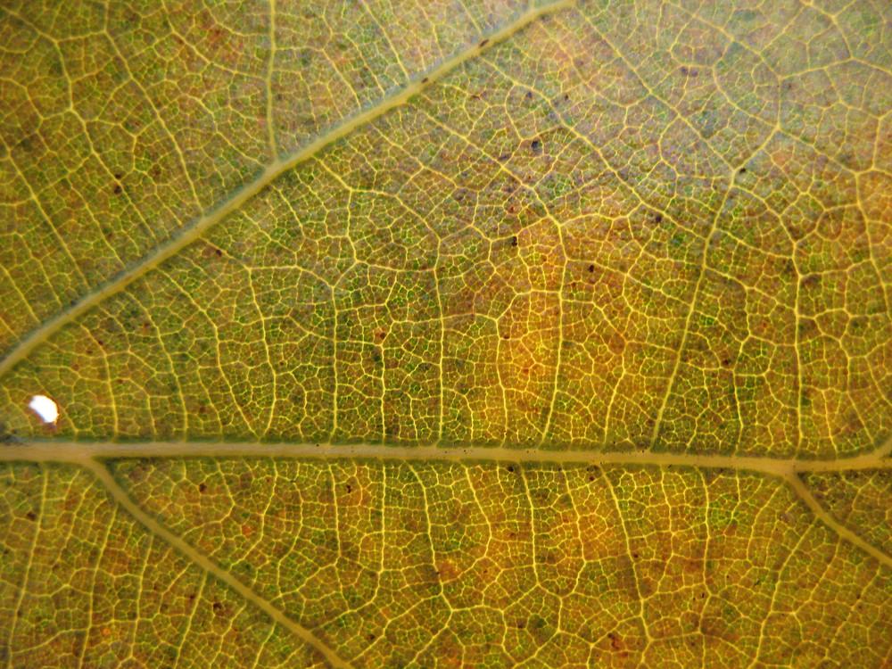Leaves 30 Texture
