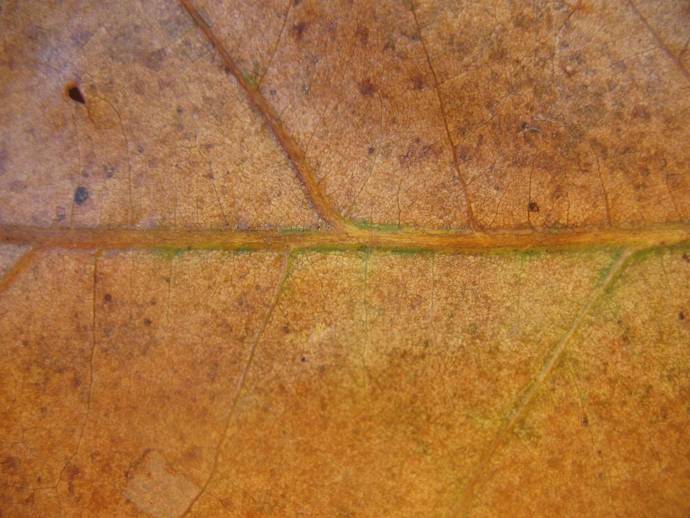 Leaves 35 Texture