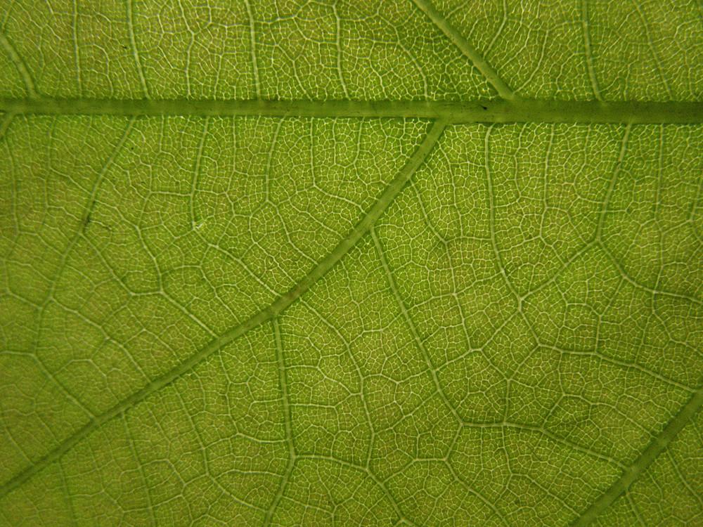 Leaves 4 Texture
