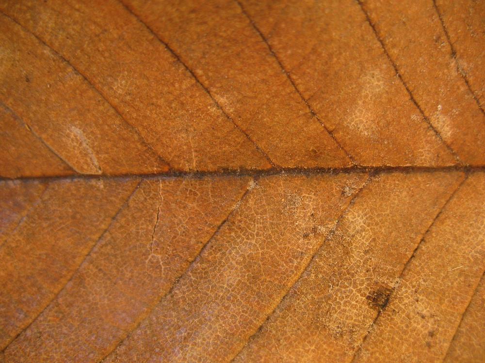Leaves 42 Texture