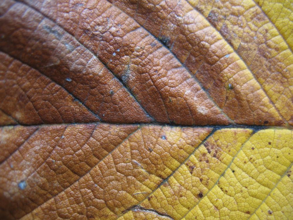 Leaves 47 Texture