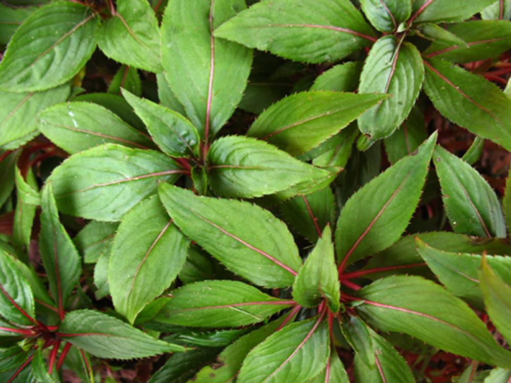 Leaves 53 Texture