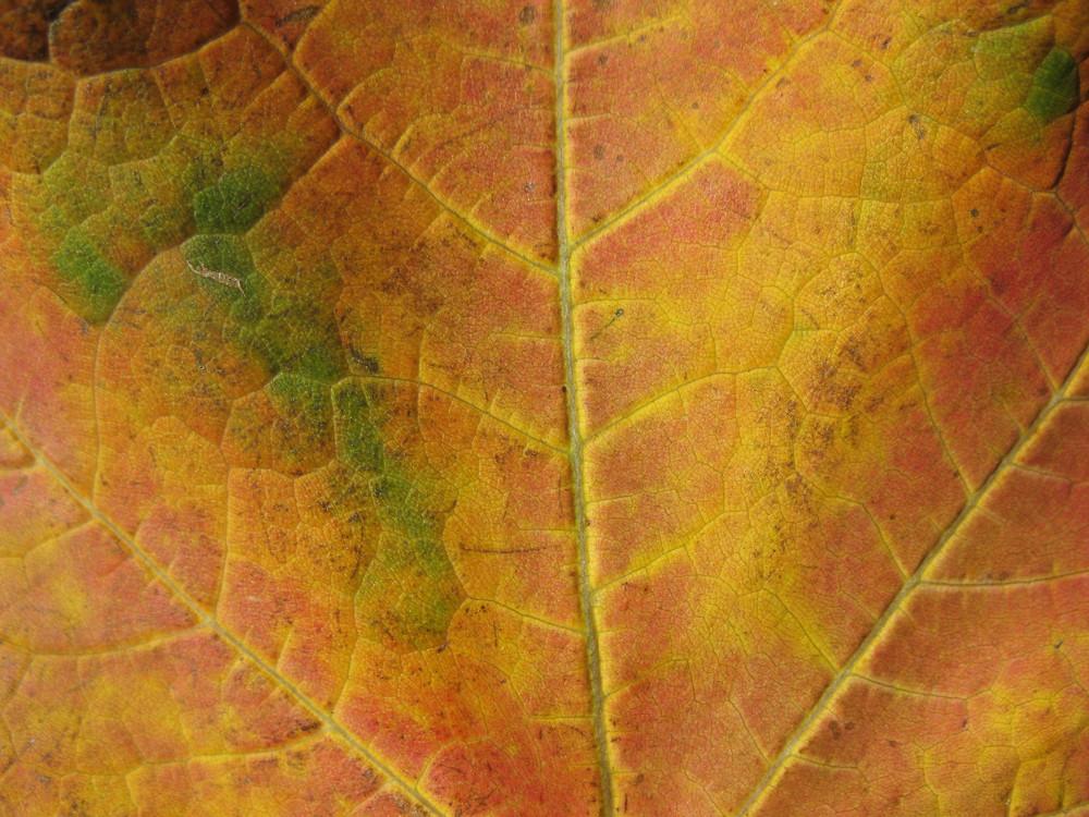Leaves 6 Texture