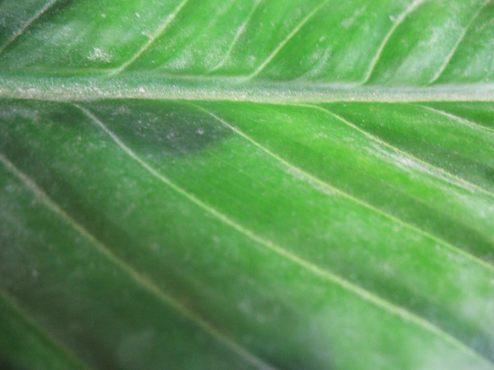 Leaves 62 Texture