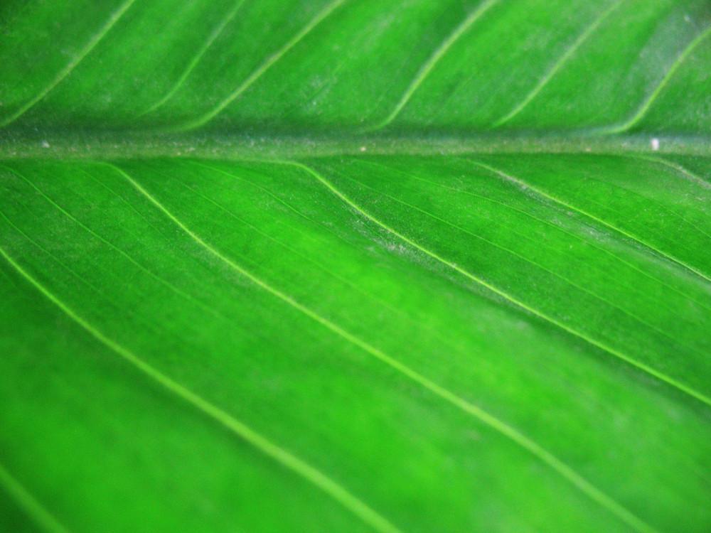 Leaves 64 Texture