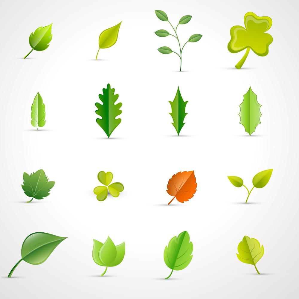 Leaves Vectors Set