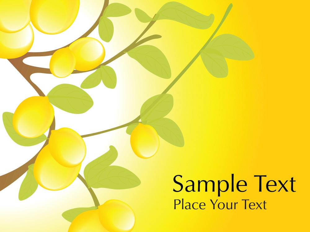 Lemon Tree With Lemon