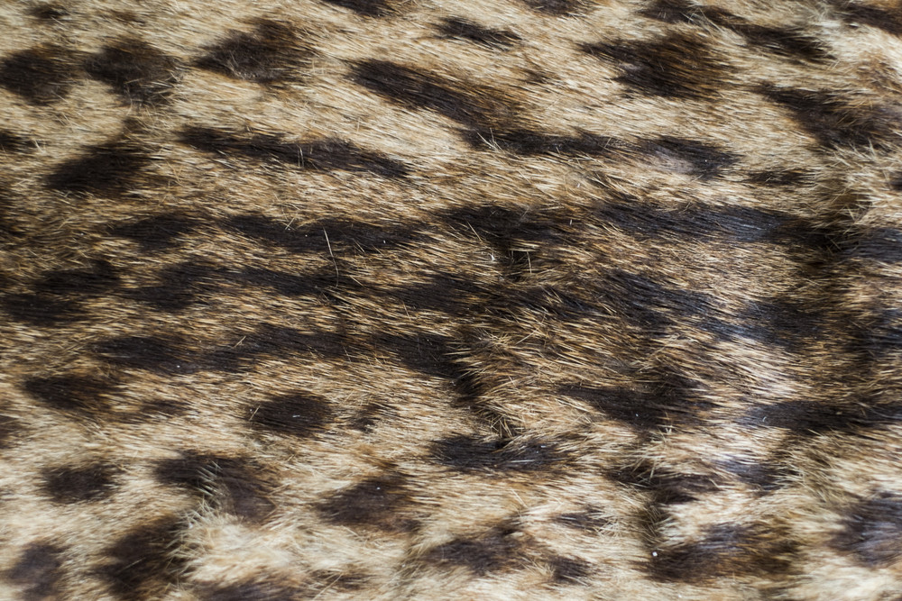 Leopard skin texture and background
