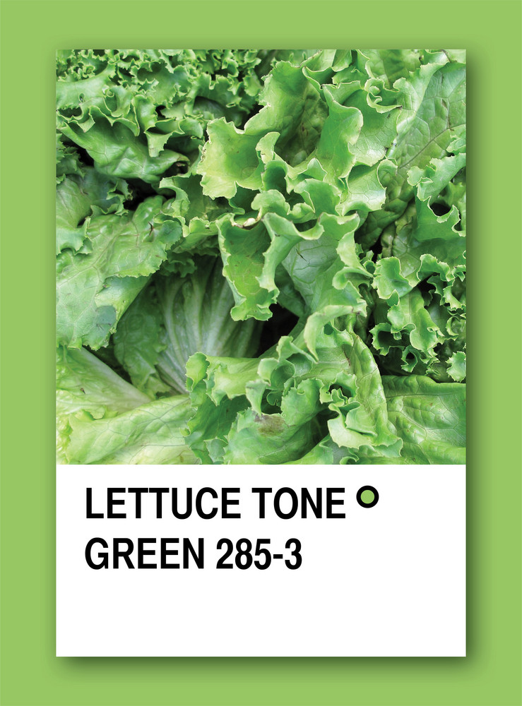Lettuce Tone Green. Color Sample Design