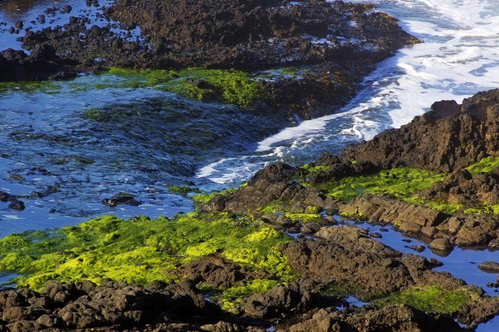 Lichen On Coast