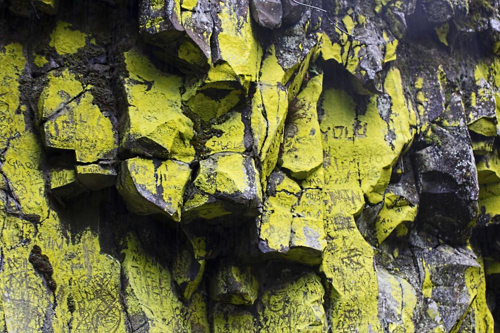 Lichen Texture 2
