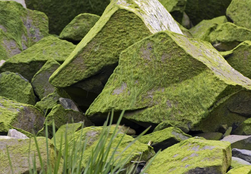 Lichen Texture 6