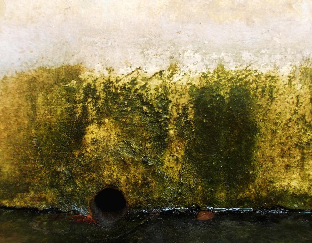 Lichen Texture 9