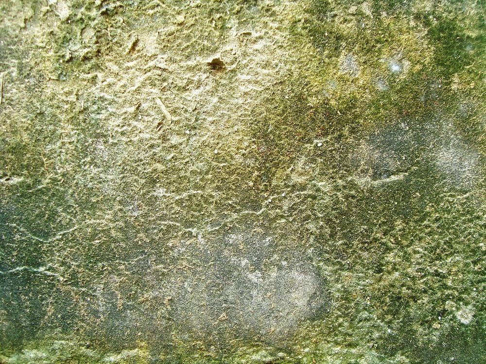Lichen_and_moss_texture