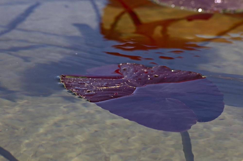 Liquid Texture 29