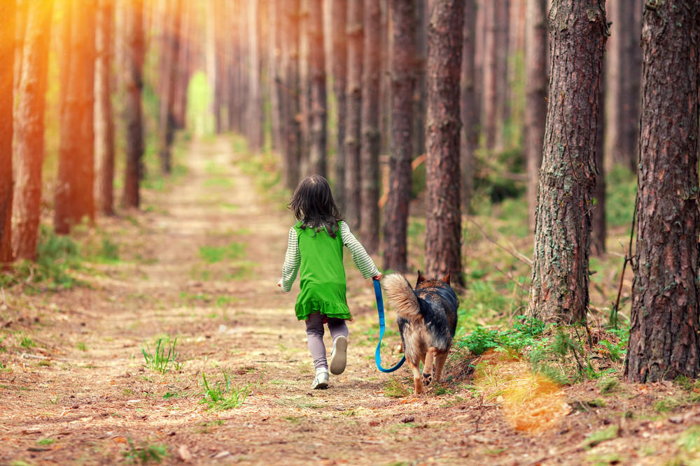 Little girl walking with big dog in the pine forest