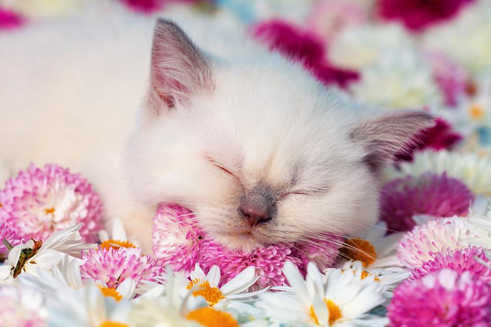 Little kitten slips among the flowers