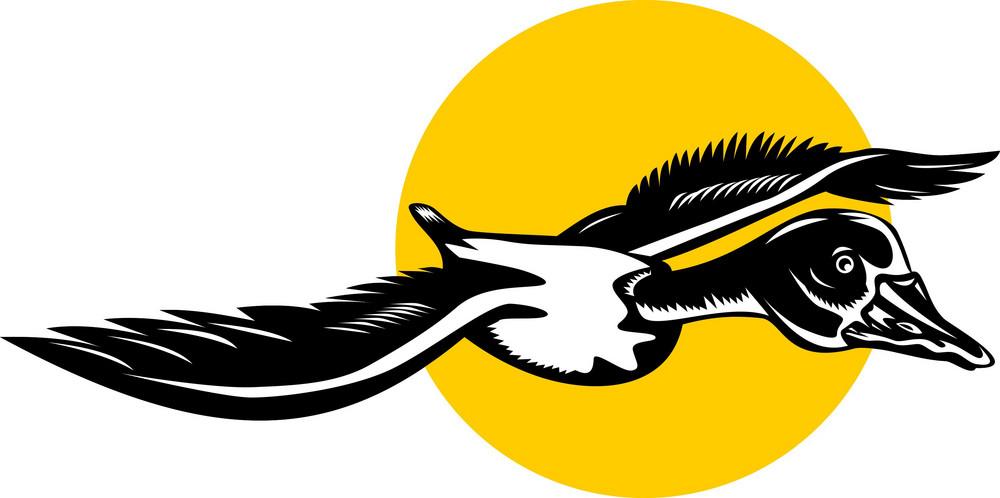Mallard Duck Goose Flying