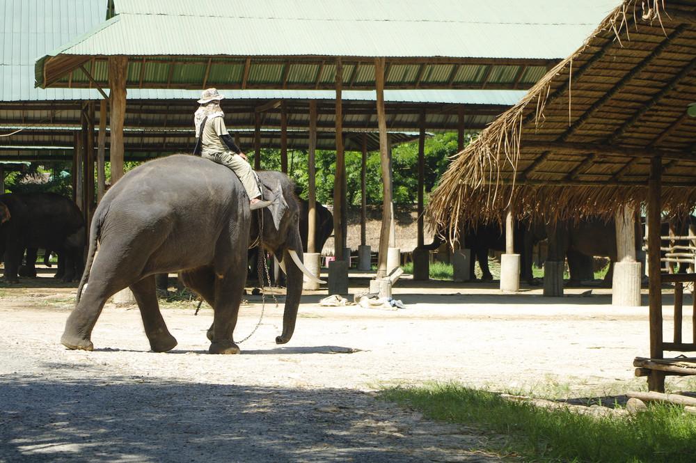 Man riding an elephant