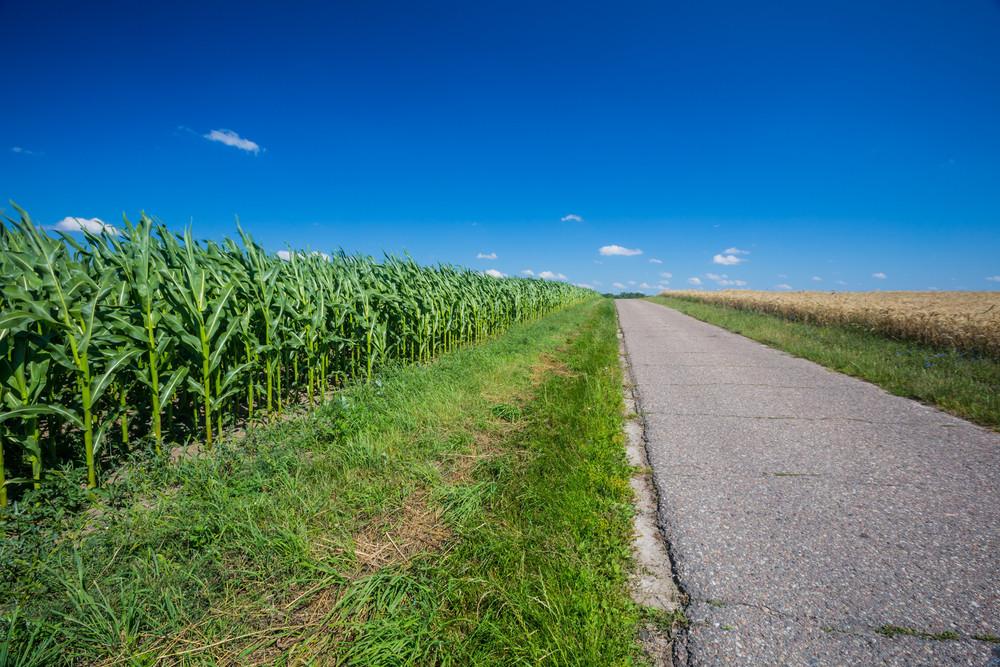 近場柏油路。波蘭農村景觀