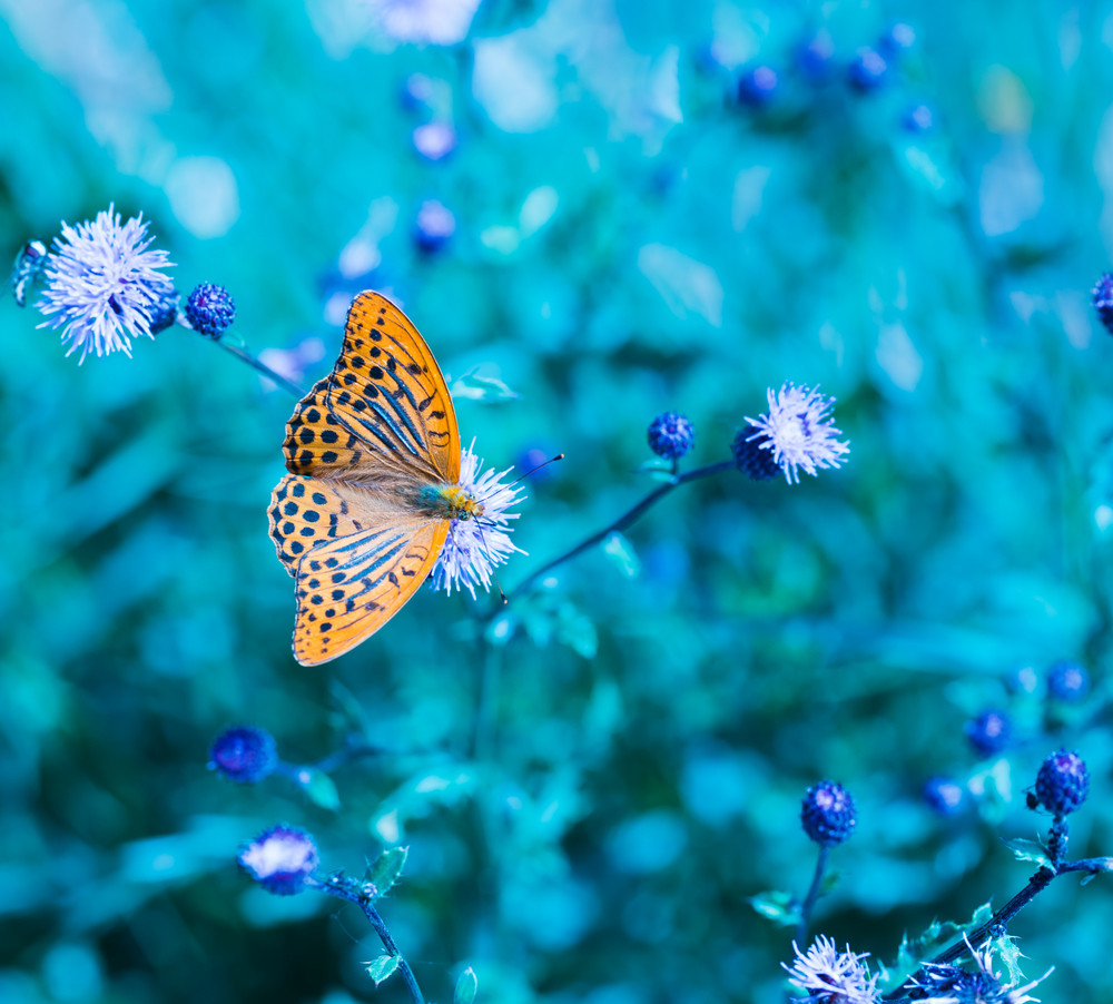 Butterfly in nature sitting on flower