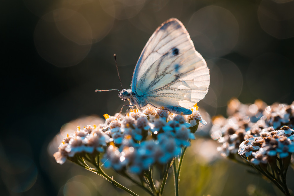 Butterfly sitting on plant. Insect close up