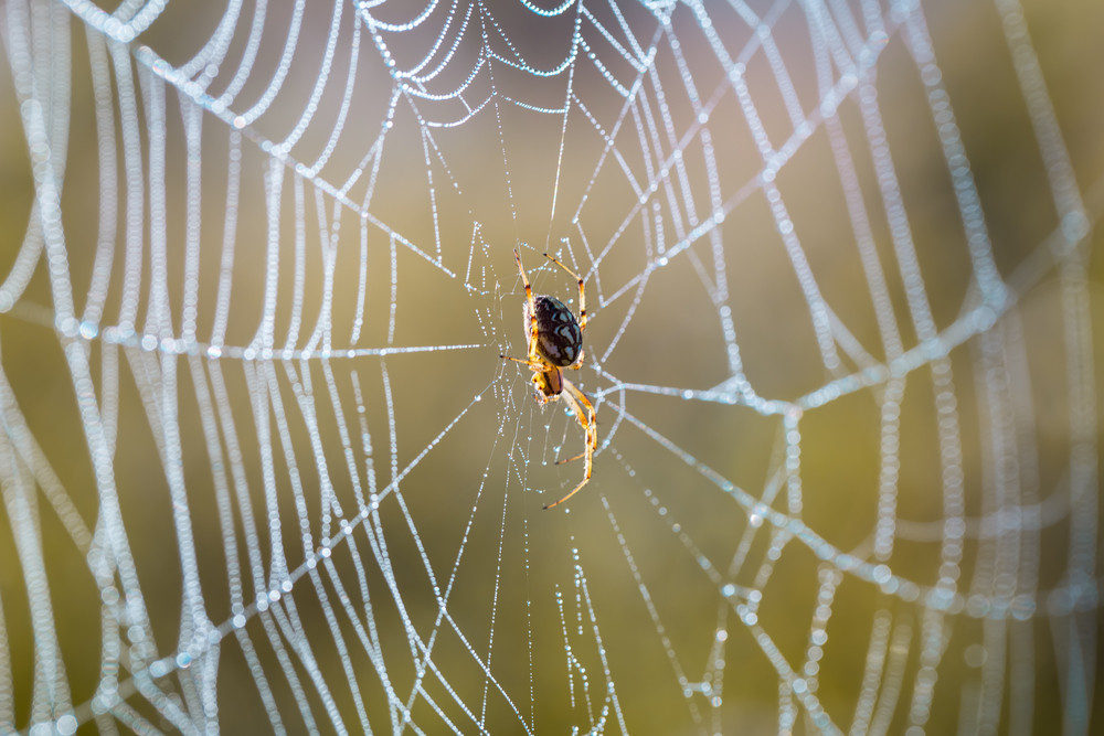 Spider web in close up.