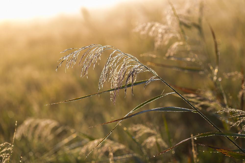 在草甸早晨。在有霧的早晨美麗的指甲油草甸