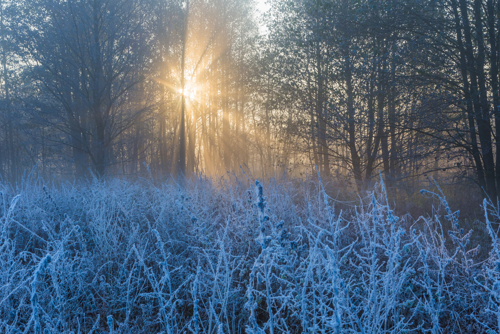 Beautiful landscape with autumnal frost at sunrise. Frozen plants on wild meadow and warm sunlight at cold morning. First signs of winter.