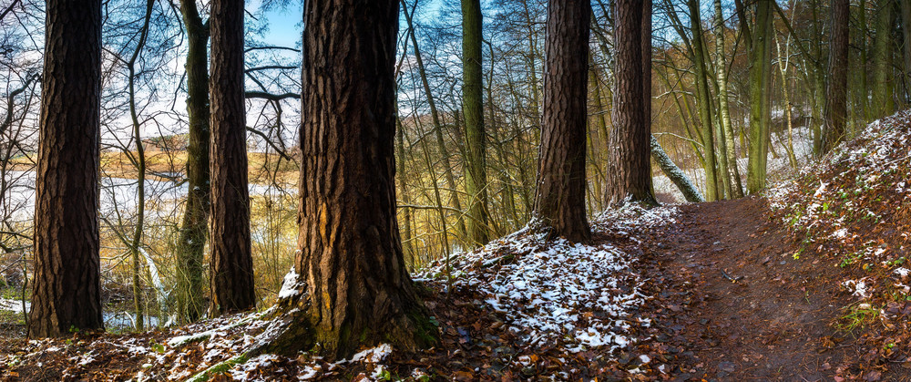 Panoramic landscape of late autumnal forest with first snow. Beautiful virgin forest with first snow in Poland.