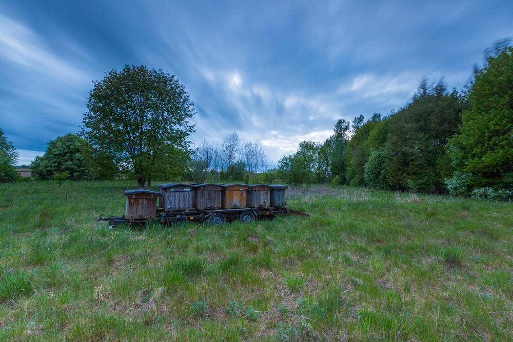 Bee hives on trail in rural landscape. Bee hives placed near rapeseed field.