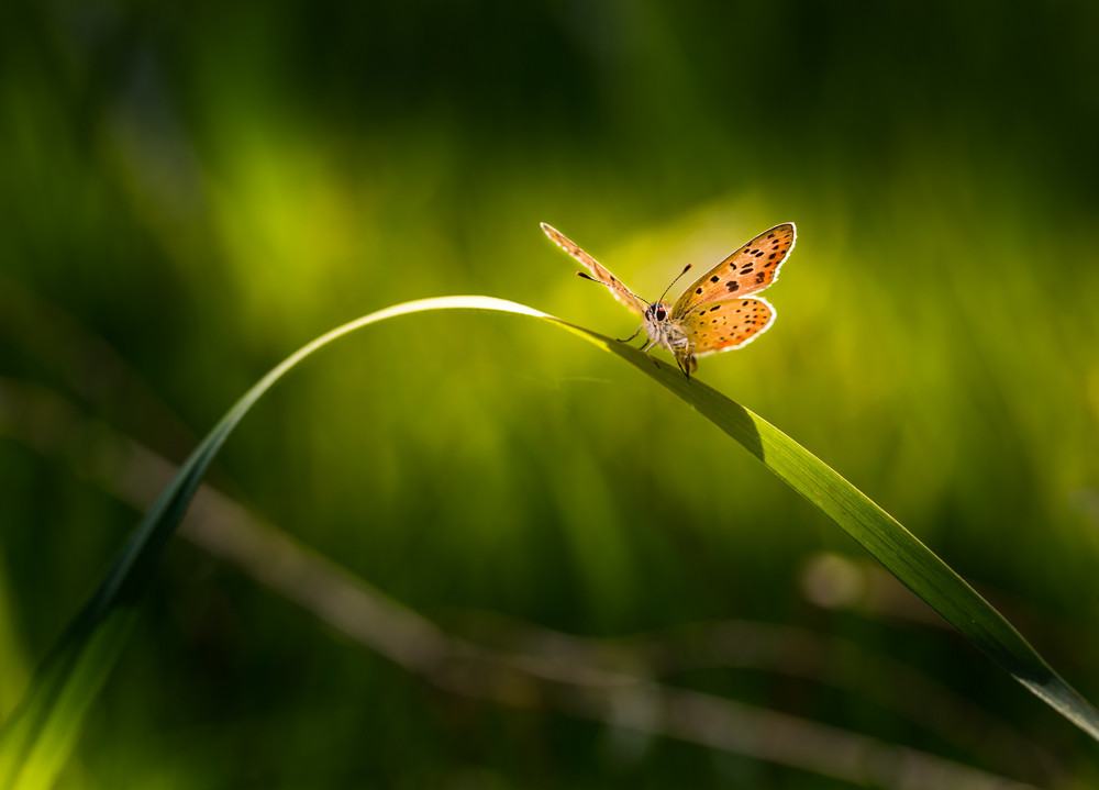 Beautiful butterfly sitting on grass leaf. Macro of butterfly