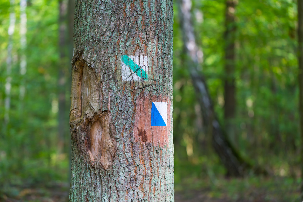Trail sign painted on tree bark in summertime forest. Beautiful forest with trails sign on tree trunk