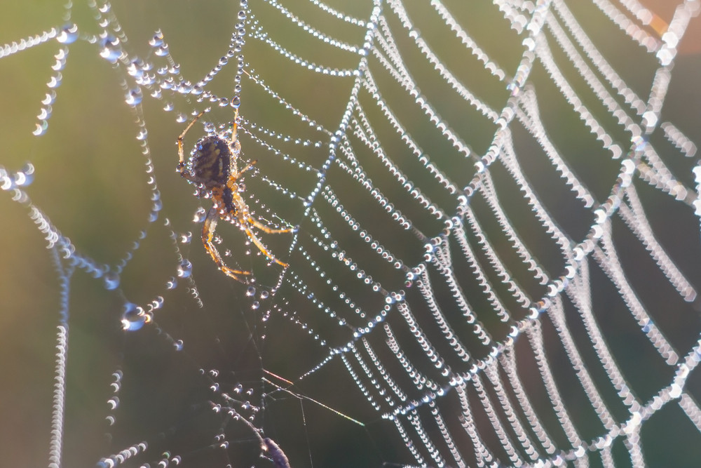 Spider photographed sitting and hunting on his web in nice light