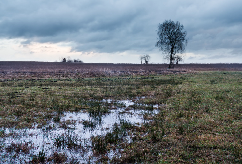 Flooded meadow landscape. Polish countryside at springtime